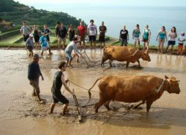 Traditional Korean farming trip